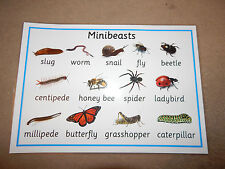 Minibeasts A4 Poster -EYFS/KS1/Childminders - Science Teaching Resource