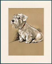 SEALYHAM TERRIER SEATED DOG LOVELY PRINT MOUNTED READY TO FRAME