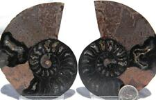 1074 Rare 1in100 Black Ammonite Pair Deep Crystals 110myo Fossil Large 90mm 3.5""