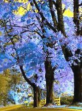 50 Royal Empress Tree Flower Seeds - Jacaranda Mimosifolia Very Fast Growing