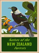 Karaka Berry Tui Bird New Zealand Vintage Travel Advertisement Art Poster Print
