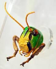 Takara Tomy 3-D Encyclopedia Japanese Insect Grasshopper head magnet Us seller