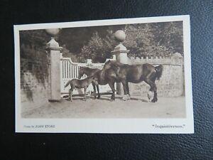 """Postcard of horses & foal, """"Inquisitiveness"""""""