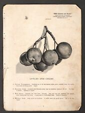 1907 Vintage Chase Nursery Rochester NY ~ Apples & Crabs ~ Cherry Pickers Photo