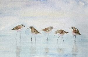 original watercolor painting sandpipers wading bird beach sea 4.5x7 inch # SIBY