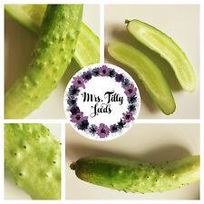 Gurke Samen 10 milde Sorte hell grüne weisse Sorte robust ertragreich Freiland