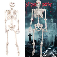 Halloween 160cm giant life size poseable skeleton Perfect decoration parties UK