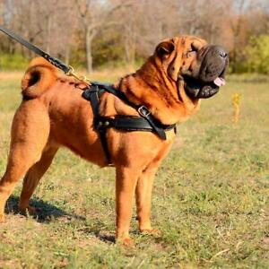 Shar Pei Harness for Dogs Leather Dog Harness Medium Large Dog Leather Harness
