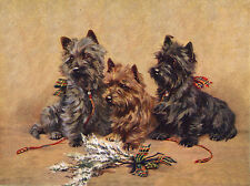 CAIRN TERRIER CHARMING DOG GREETINGS NOTE CARD THREE DOGS WITH LUCKY HEATHER
