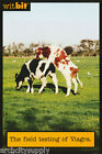 POSTER : ADULT: FIELD TEST OF VIAGRA - BULL & COW -  FREE SHIP   #3616   LP52 J