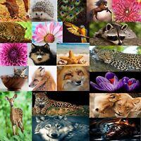 DMC Huge Nature Animal Cross Stitch Pattern Kits PDF Counted Chart