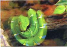 3D Lenticular Postcard Greeting Card - Green Snake