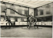 1960 Dinosaur Diplodocus skeleton Paleontological Museum German vintage postcard
