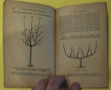 Pour Former et Tailler les Arbres Fruitiers Agriculture Arboriculture 1947