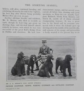 THE SPORTING SPANIEL BY R CLAUDE CANE LOOSE 33 PAGE CHAPTER FROM 1907 BOOK
