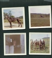 Vintage Photos Horses Autumn Bell Sundae Dove Skylark 994048