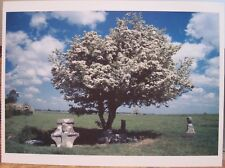 Oversize Irish Postcard May Bush and Holy Well County OFFALY Ireland Tom Kelly