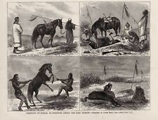 KAW KANSA INDIAN NATIVE AMERICAN BURIAL CEREMONY CUSTOM, STRANGLING HORSE 1868