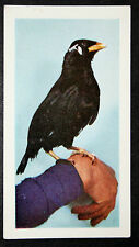 MYNAH BIRD    Vintage Colour Photo Card # VGC