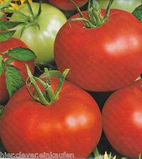 Tomate Bodeglut DDR Sorte Gewächshaus oder Folientomate ca. 35 Korn / Seeds