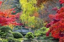 Splendido giardino giapponese tela paesaggio natura #288 qualità Wall Art A1