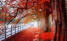 PRETTY AUTUMN TREES/RED  CANVAS PICTURE WALL ART MEDIUM  20x30 INCHES