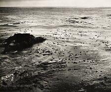 1960s EDWARD WESTON Vintage Pacific Ocean Seaweed Kelp Seascape Photo Art 11X14