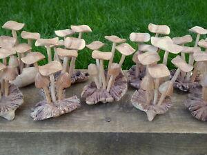 Parasite Wooden Mushroom Carving 6 Mushrooms On Base Multi Listing Choose SALE!