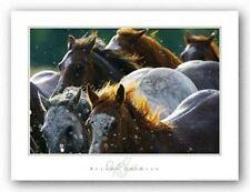 HORSE ART PRINT Splash 'n Dash David R Stoecklein