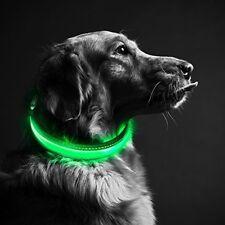 Jouets lumineux bleus pour chien