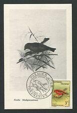 MALAGASY MK 1963 VÖGEL BIRDS VOGEL OISEAU MAXIMUMKARTE MAXIMUM CARD MC CM d633