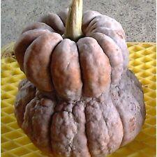 Pumpkin SHISHIGATANI-Pumpkin Seeds- BEAUTIFUL,OLD, GREAT TASTE-16 SEEDS.
