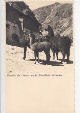 B78728 llamas en la cordillera peruana types peru scan front/back image