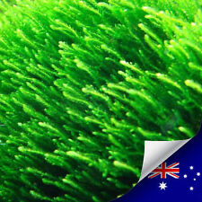 Aquarium Live plant Flame Moss For Fish & Shrimp Tank