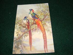 VINTAGE POSTCARD ART SIGNED EB LADY AMHERST? PHEASANT BIRDS STZF SWISS LITHO