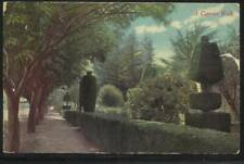 A1679 A Cypress Walk Vintage Post Card Postcard