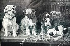 Sweet Puppies 1885 UP to MISCHIEF Chewing Flowers 5 Dogs Matted Antique Print