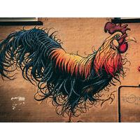 Moran Graffiti Chicken Rooster Wall Street Large Canvas Wall Art Print