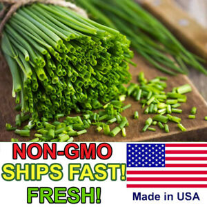 Heirloom Onion Chives Seeds | Common Chives Non-GMO | Fresh Herb Garden Seeds
