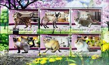 Somaliland- 2017 - Cats, 1 M/Sh, MNH-,SOM 002