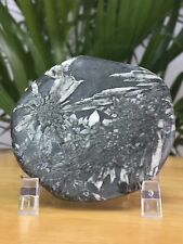 Natural Chrysanthemum Stone W/Stand Flower Stone Gemstone Specimen Palm Stone