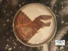 "Charley Harper Jurassic Dinosaur Prehistory 1"" Glass Sewing Button Charles CH322"
