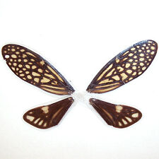 COATED REAL CICADA wings ooak pixie fairy MLP doll  #C3