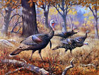 Wall art Canvas Print Colorful Turkey Oil painting Printed on canvas L840