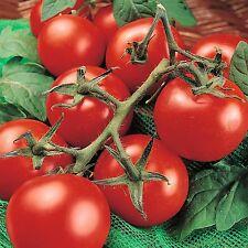 Tomato Seed, Moneymaker, Non-Gmo Heirloom Tomato Seeds, Prolific & Reliable 50ct