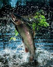 Fish Caught on a Fly - 8x10 Art Print - Ready to Frame