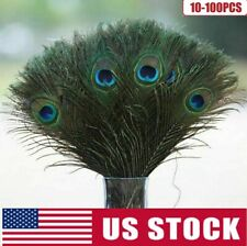 New Wholesale 10-12 in Peacock Tail Feathers Natural Long DIY Party Craft Decor