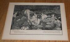 1909 Antique Print Hylas and the Water Nymphs John William Waterhouse Mermaids