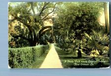 COLOR POSTCARD L_2358 A SHADY WALK AMONG NEW ORLEANS