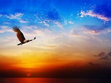 Bird Prey brahminy Kite Flying Sunset Sky Photo Art Print Poster bmp2154a
